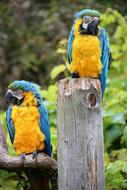 Beautiful and colorful macaw parrots on the wood, among the colorful plants