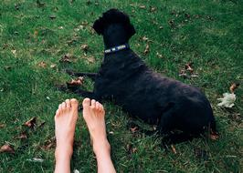 black Dog lays on green lawn beside person's feet