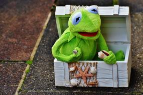 Kermit Frog, soft toy in box decorated with seashells