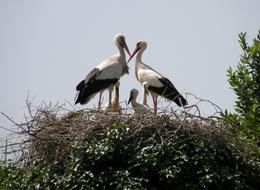 a family of storks in a nest outside the city