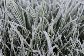 Grass Frost snow Background