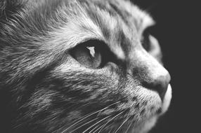 black and white portrait of a sweet cat