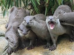 Otters Group
