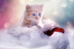 Christmas photo of a cute kitten