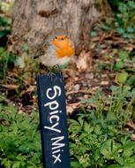 Redbreast Robin perched sign in garden