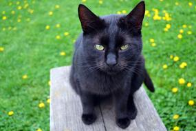 portrait of a young black cat