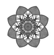 white and black drawing of mandala pattern lines flower