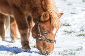 charming Horse Small Haflinger