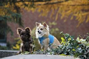 two little dogs in autumn