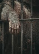 ape hand in the zoo