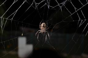 Close-up of the colorful spider on the cobweb, among the darkness