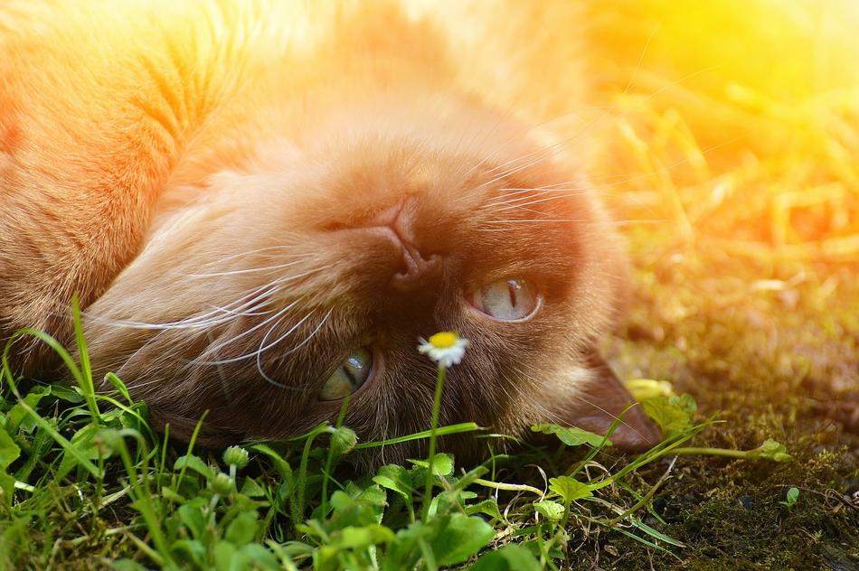 face of Cat laying on grass upside down