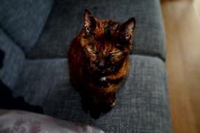 Portrait of the colorful, beautiful and cute cat on the sofa, in light