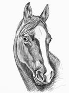 Beautiful, black and white drawing of the portrait of a horse