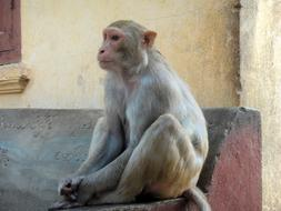 monkey is sitting on a stone bench