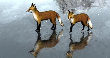 Drawing of the beautiful and colorful foxes on the ice
