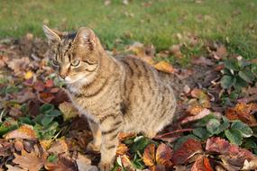 Cat Autumn Grass