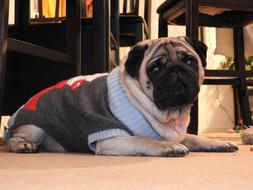photo of a pug in a christmas sweater