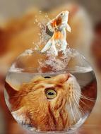 the head of the ginger kitten in the aquarium and the goldfish jumps out of the aquarium