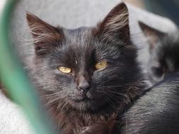 photo of a sleepy black kitten with yellow eyes