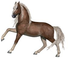 horse stallion drawing