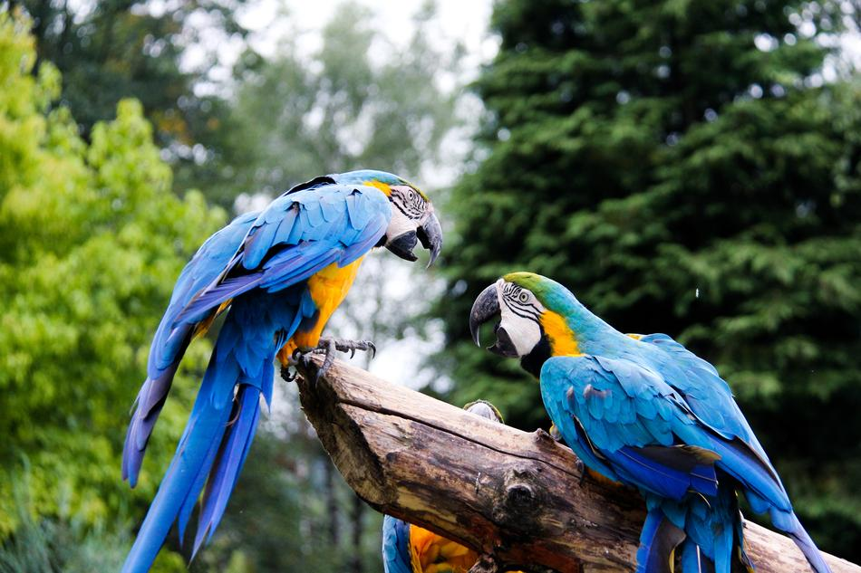 goodly Parrots Zoo