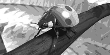 monochrome drawing of a ladybug on a stalk