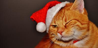 young ginger cat in christmas hat