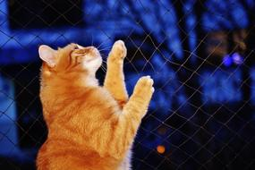 domestic ginger cat clings to bars
