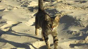 Cat Stray Beach sand