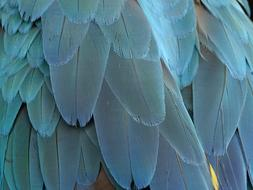 perfect Feather Plumage Blue