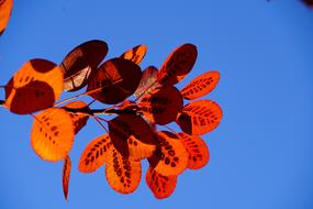 Fall Leaves red sun