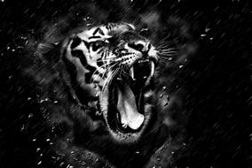 monochrome image of a tiger with open mouth
