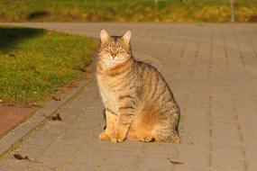 tabby cat sits on the track and basks in the sun
