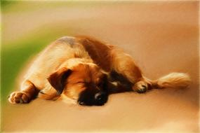 Drawing dog sleep