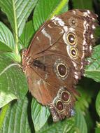 brown butterfly sits on a green plant
