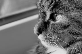 face Cat Black And White