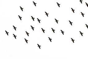 Bird Sky Flight drawing