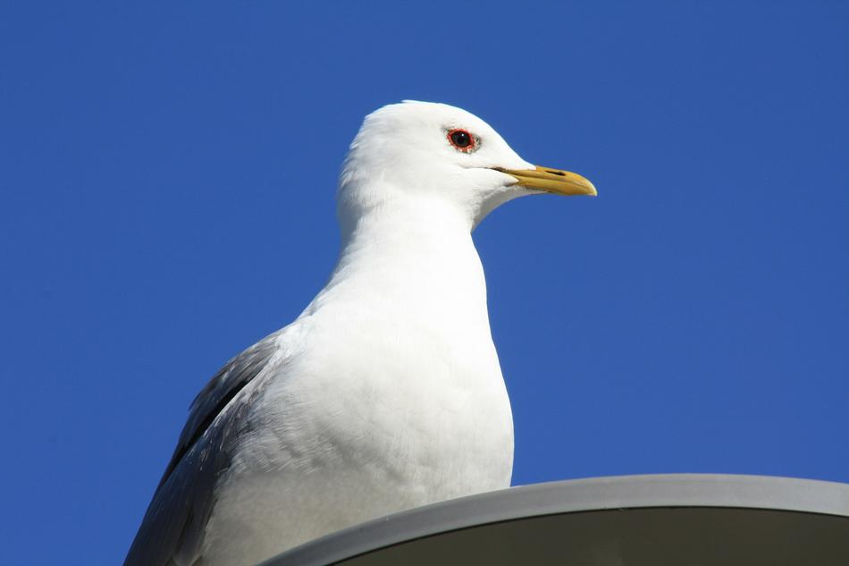 seagull sits on a street lamp against a blue sky