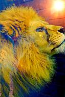 image of a colorful lion head