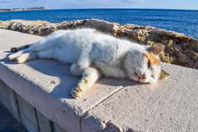 Cat resting on stone at sea