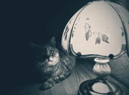 Cat beside table Lamp at darkness