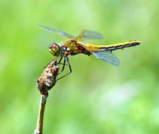 dragonfly sits on a tree bud