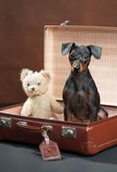Dog and Teddy Bear in vintage suitcase