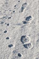 footprints of a dog and a man in the snow