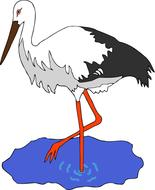 painted black and white stork in a puddle