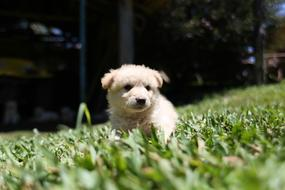 cute fluffy puppy is sitting in the grass