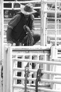Rodeo Horse black and white