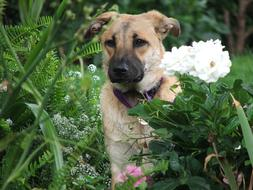 domestic dog in a green garden among flowers