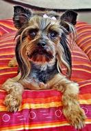 goodly Yorkie Dog Bed